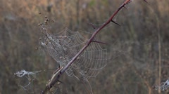 The kingdom of the spiders in a dark forest Stock Footage