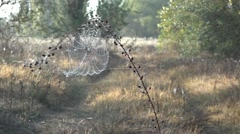 Morning dew, silence, peace, bliss Stock Footage