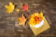 Golden envelope and fall leaves Stock Photos