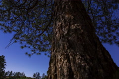 5K MoCo Tracking Astro Timelapse of Moonshadow Casting on Pine Tree  Stock Footage
