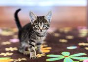 Funny striped kitten sitting on a bed Stock Photos