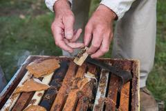 Beekeeper holding a wooden queen cage Stock Photos