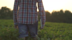 Farmer or agronomist examine soybean plant in field using tablet Stock Footage