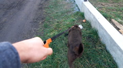 Man walking with dog dog on the leash in the country, super slow motion Stock Footage