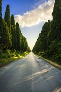 Bolgheri famous cypresses trees straight boulevard on backlight sunset landscape Stock Photos