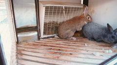 Rabbits reproduction. breeding rabbits Stock Footage