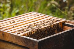 Honey bee frame covered with bees Stock Photos