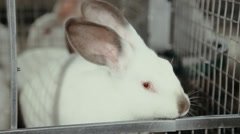 White rabbit in cage Stock Footage