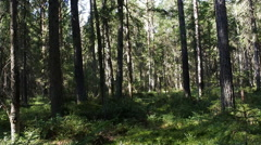 Slow penetration into  virgin forest 1 Stock Footage