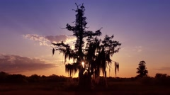Sunset in Florida wetlands Stock Footage