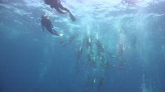 Good visibility and whale shark Stock Footage