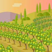 Rural Landscape with Vineyard Stock Illustration