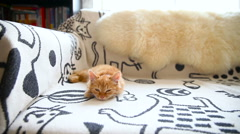 Cute ginger kitty comfortably snuggles on blanket in bed. Cozy morning at home. Stock Footage