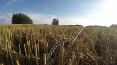 Landscape with freshly harvested wheat field, time lapse 4k Stock Footage