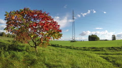 Autumnal landscape with sumac and electrical pylon, time lapse 4k Stock Footage