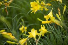 Close-up of water drops on yellow flowers at field during rainy season Stock Photos
