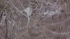 Dew covered cobweb Stock Footage
