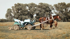 Two horses grazing in a coach on the field Stock Footage