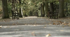 Beautiful autumn walk in the park with trees and fallen leaves Stock Footage
