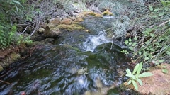 Wood River in summer, passing by the munipal term of Paterna del Madera. Stock Footage