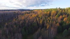 Aerial view a colorful forest at fall Stock Footage