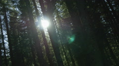 Sun light filtering through dense forest trees Stock Footage
