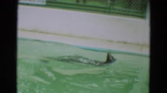 1965: seals in captivity, one swimming in tank with sign indicating fish Stock Footage