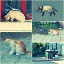 Feral Cats live outdoors and need adoption collage toned image set Stock Photos