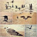 Collage of seagulls on a sea coast set of toned images Stock Photos