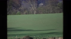1969: green grassy field along lake shore with pine trees IRELAND Stock Footage