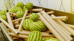 Watermelons and new pipes, unusual fruit exhibition Stock Footage