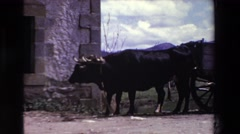 1969: bulls or oxen standing in front of a wooden cart against a mountains Stock Footage