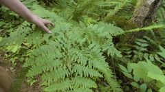 Woman Touches A Fern Leaf In Beautiful Lush Forest Stock Footage