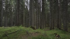 Sweeping time lapse, moving across a damp forest filled with green brush. Stock Footage