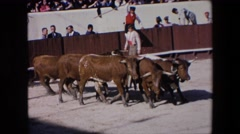 1971: bulls being herded into a stadium before and bull fight SPAIN Stock Footage