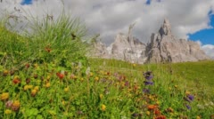 Time lapse of a lush Italian meadow with greenery blowing in the wind. Stock Footage