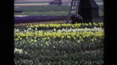 1967: beautiful flower farm and windmill Stock Footage