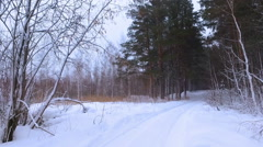 Siberian winter forest under the snow Stock Footage