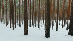 Siberian winter pine forest under the snow Stock Footage