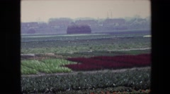 1967: vast agricultural field with lot of crops blossomed BRUSSELS, BELGIUM Stock Footage