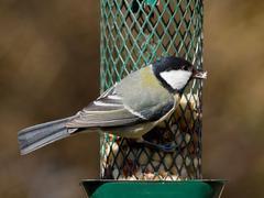 Titmouse on feeder Stock Photos