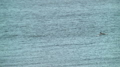 Dolphins splash tails roll Stock Footage