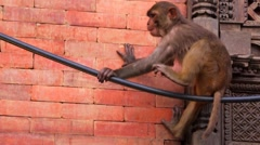 Monkey itches near gift shop with traditional souvenirs at the street. Kathmandu Stock Footage
