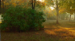 Rays of sun through the trees crown Stock Footage
