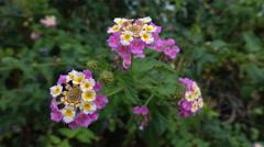 Flowers in a garden near a sea Stock Footage