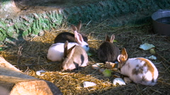 The family of hares chew the grass in the sun Stock Footage