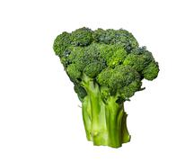 Broccoli isolated on white background Stock Photos