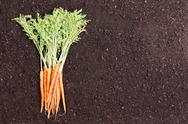 Single bundle of raw carrots over soil Stock Photos