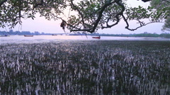 Root of mangrove tree Stock Footage