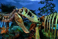 Dinosaur Exibit at the Indianapolis Children's Museum Kuvituskuvat